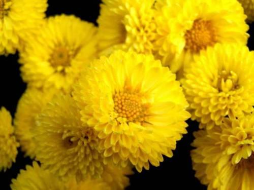 Цветы другие цветы моего сада